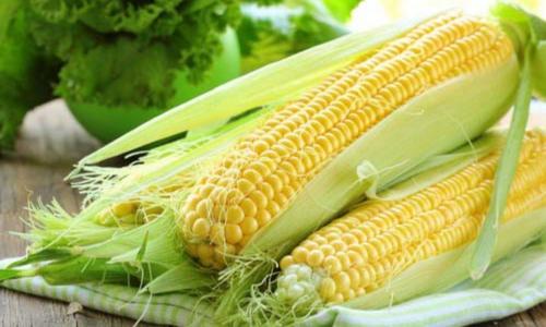 Кукуруза: польза и вред для организма